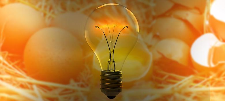 A lâmpada da chocadeira fica piscando? Veja por que isso acontece