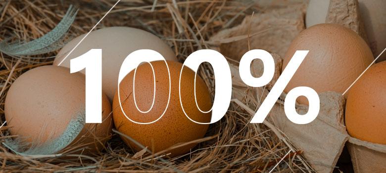 Ovos de galinha com taxa de eclosão em destaque